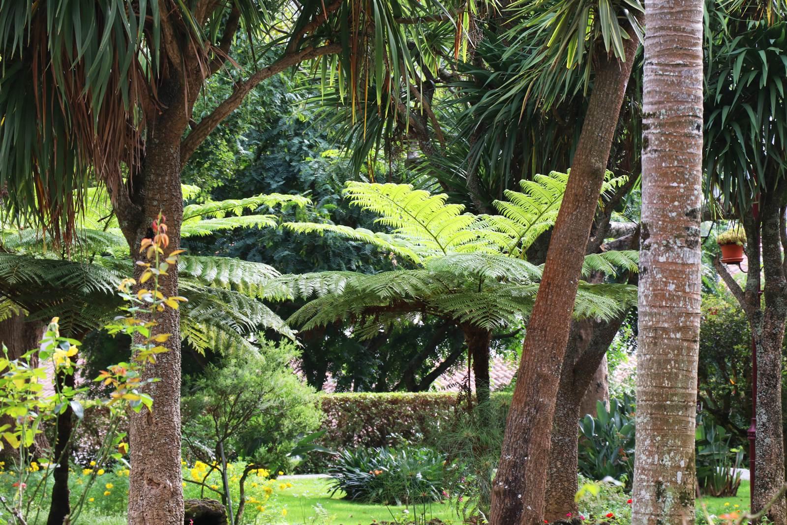 Angra Jardin botanique