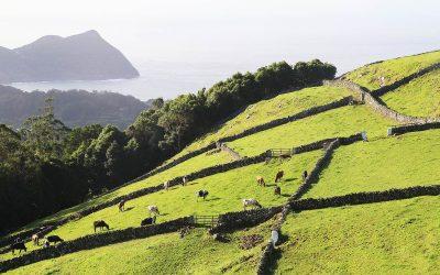 Terceira, une île festive et bucolique aux Açores
