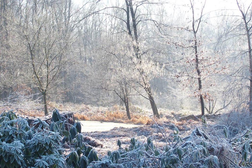 Bois Eloi sous la neige