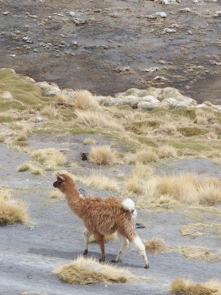 Altiplano Bolivie