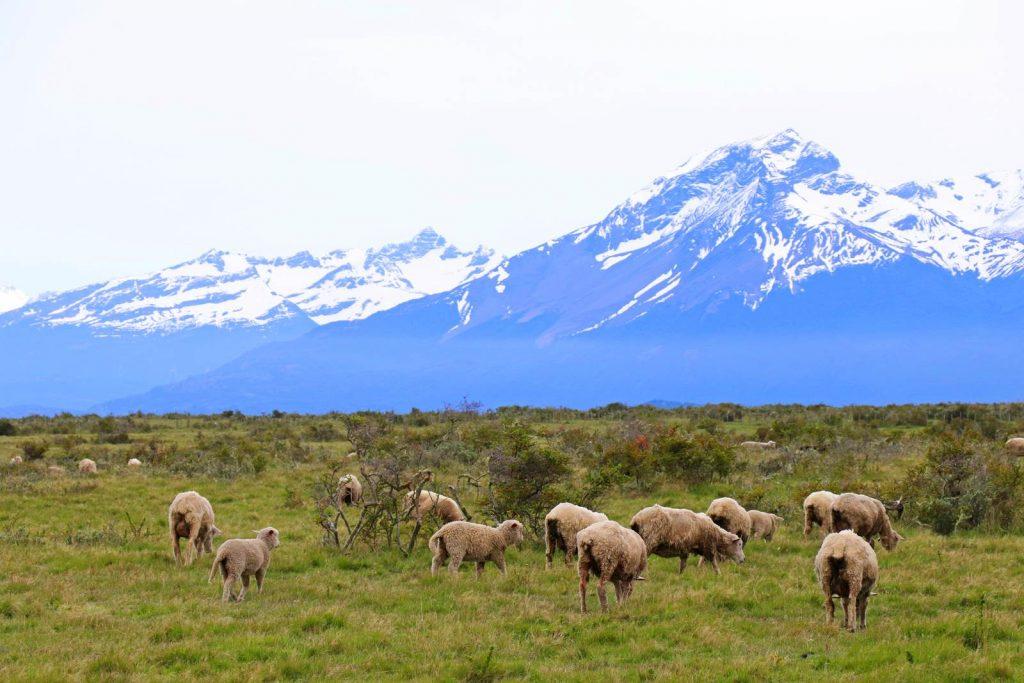 Chili Patagonie