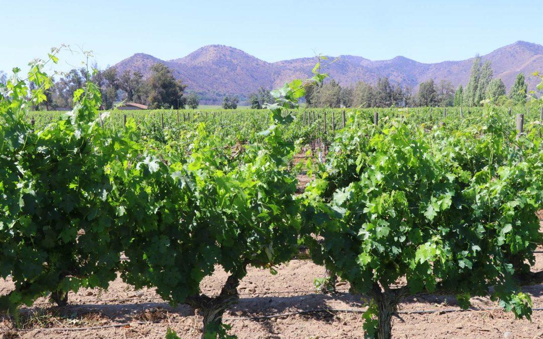 Vina Santa Rita, un vignoble chilien