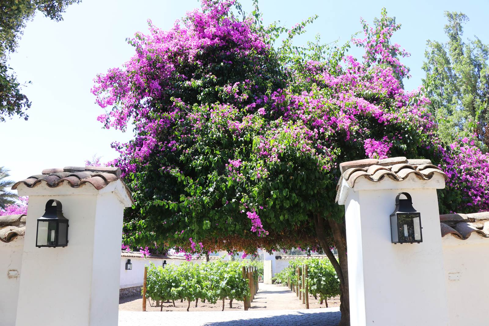 Vignobles Santa Rita
