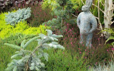 Conifères nains, pour rocailles et jardinières