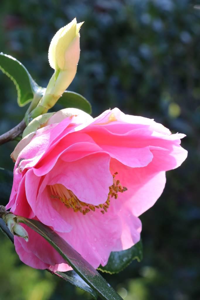 Cornouailles gardens