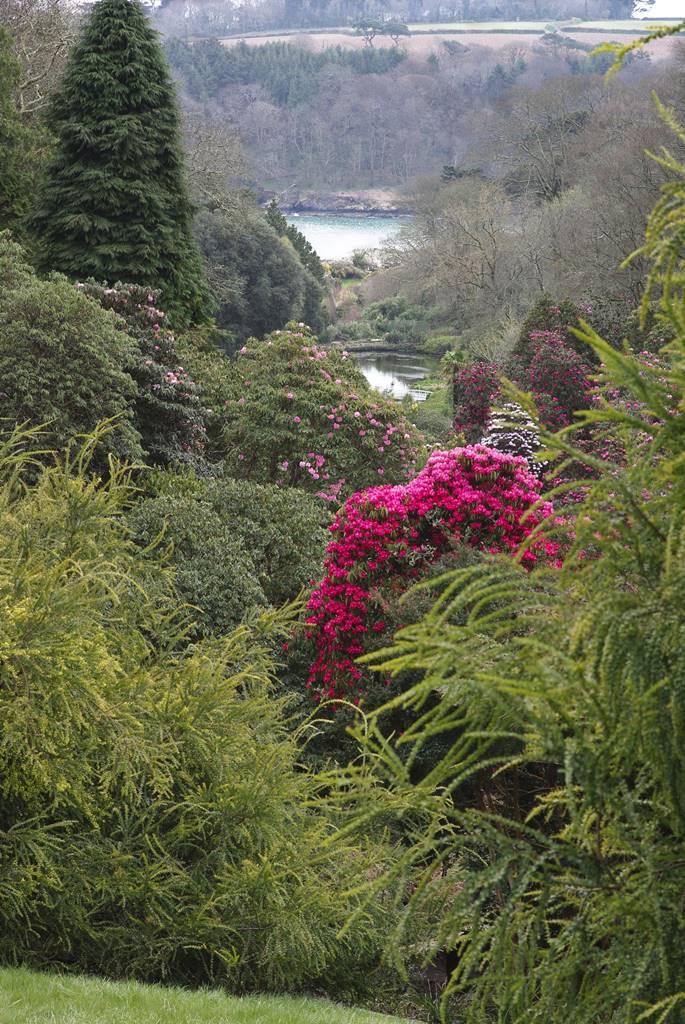 Trebah Cornwall