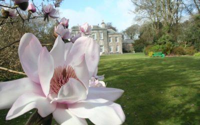 Trewithen Garden, en Cornouailles