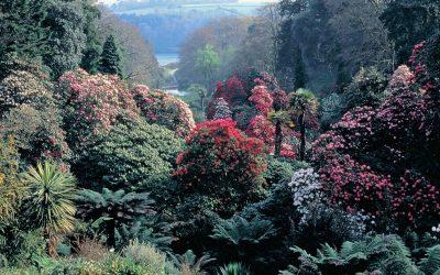 Trebah Garden, la perle des Cornouailles