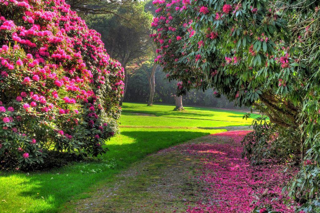 Tregothnan Botanic Garden