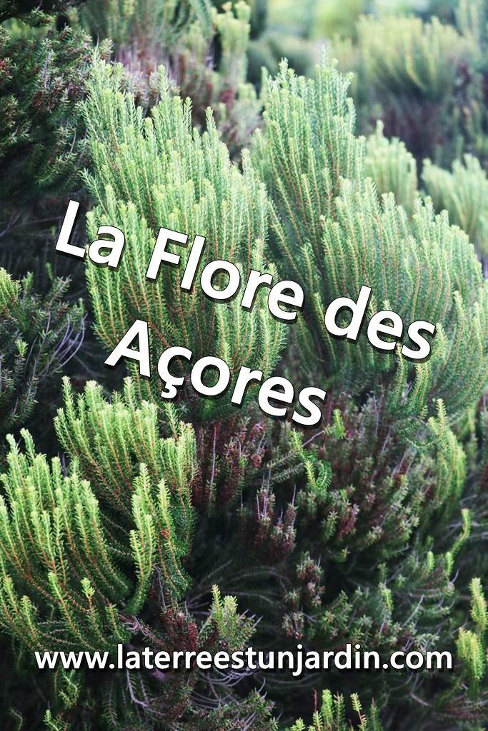 Flore des Açores