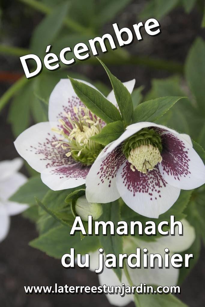 Décembre Almanach du Jardinier