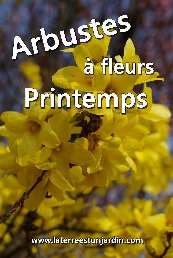 Arbustes printemps
