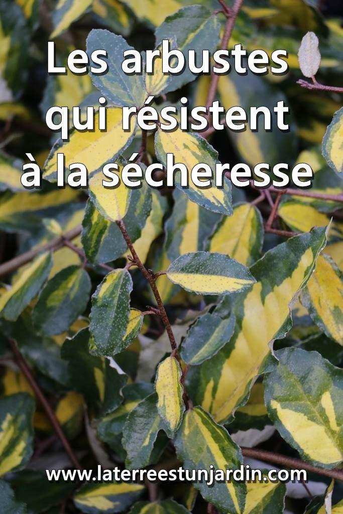 Arbustes sécheresse