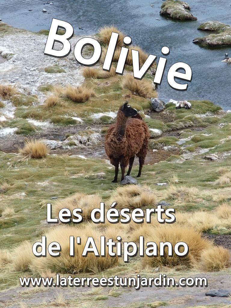 Bolivie Altiplano