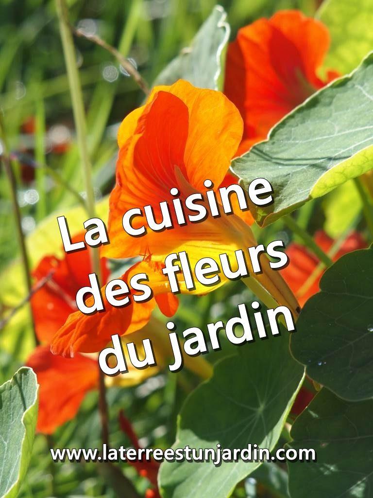 Cuisine fleurs jardin