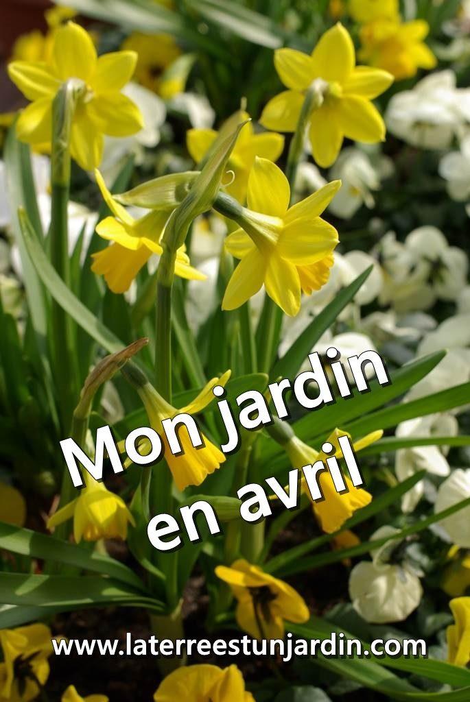 Mon jardin en avril