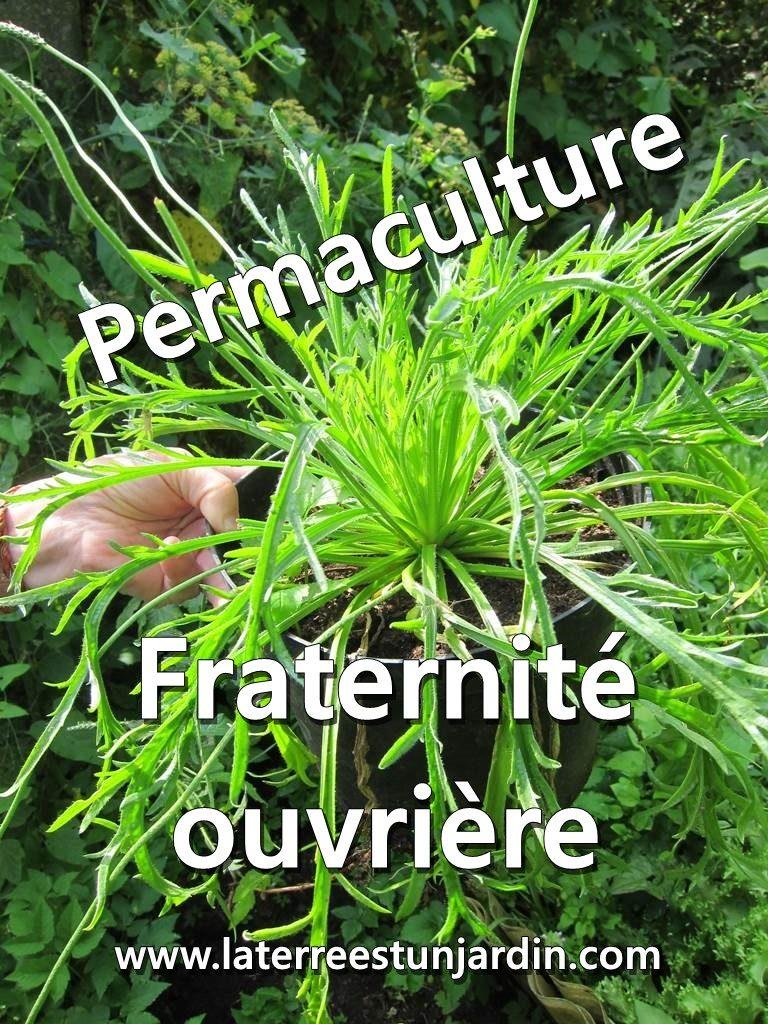 Jardin permaculture Fraternité Ouvrière