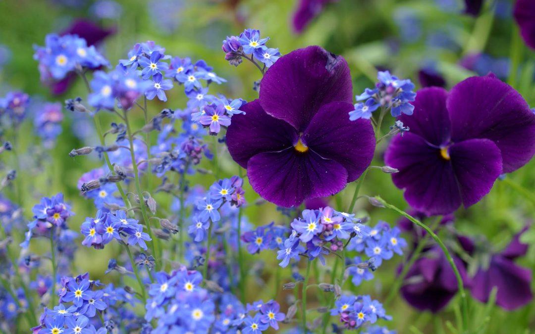 Jardinage, c'est le printemps!