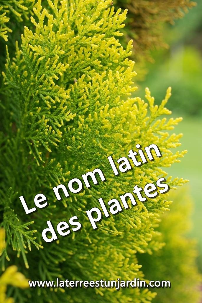 Latin des plantes