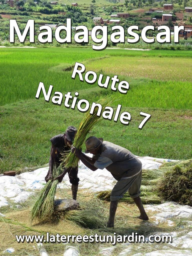 Madagascar N7