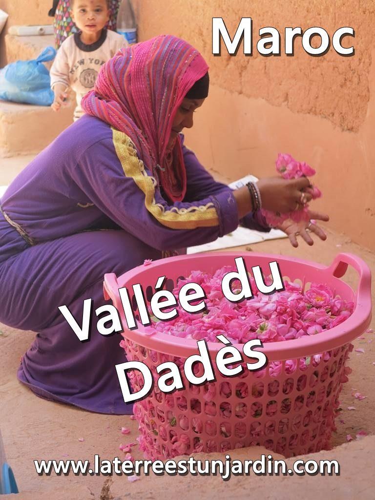 Maroc Vallée des Roses