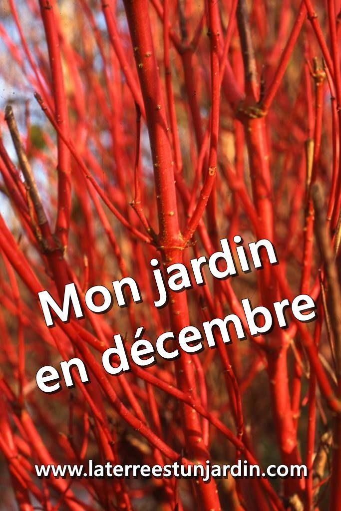 Mon jardin en décembre