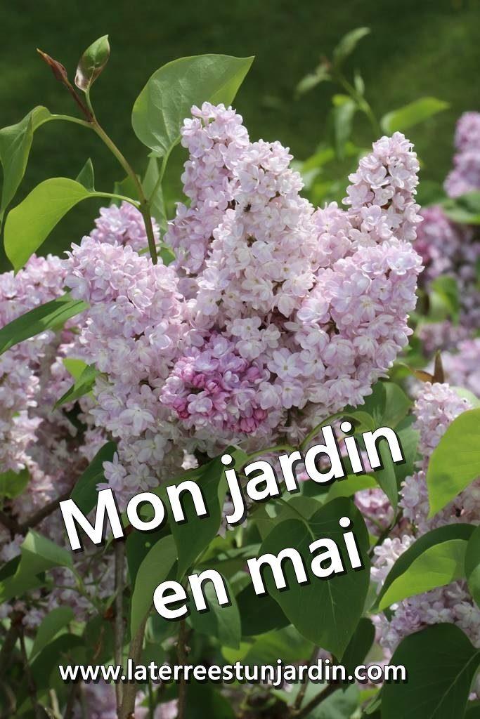 Mon jardin en mai
