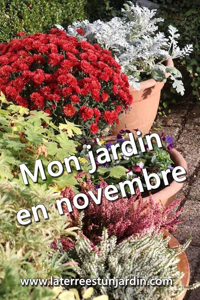 Mon jardin en novembre