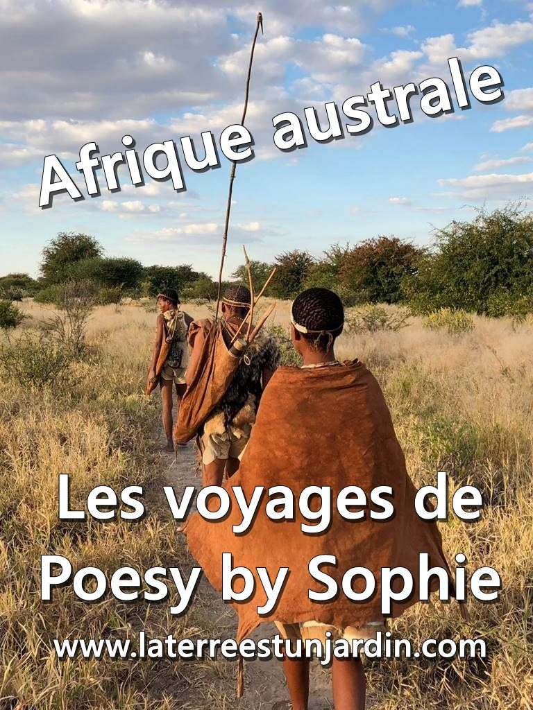 Poesy by Sophie