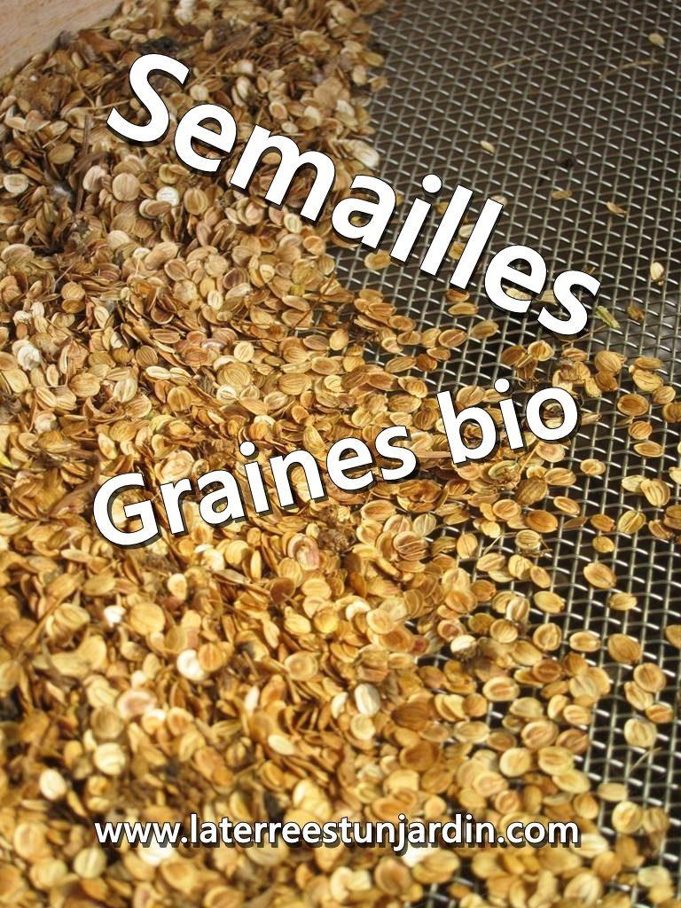 Semailles graines bio