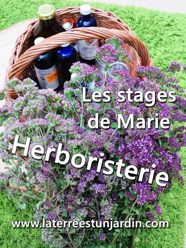 Stage herboristerie