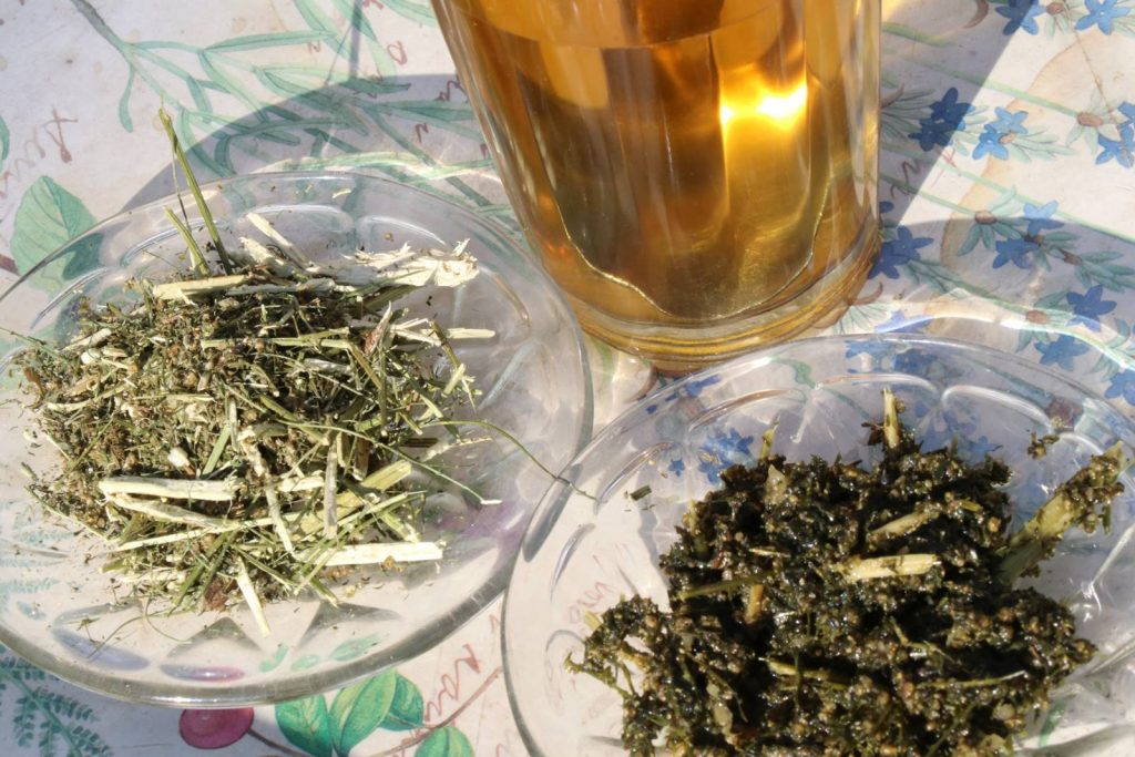 Artemisia annua tisane