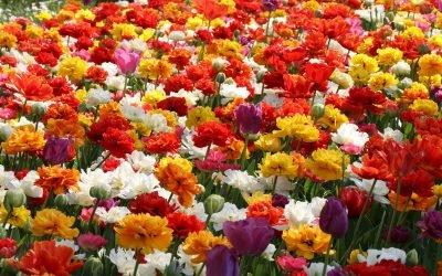 Floralia Brussels, couleur arc-en-ciel