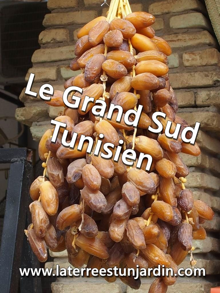 Grand Sud Tunisien