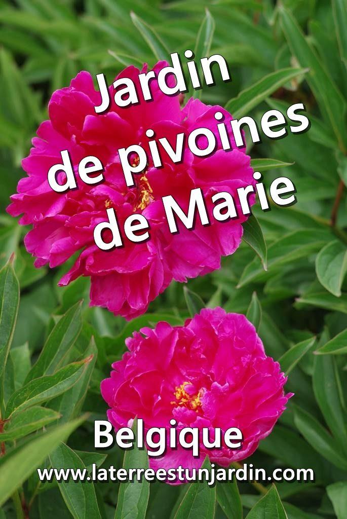 Jardin de pivoines de Marie