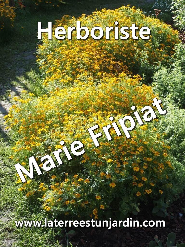 Marie Fripiat