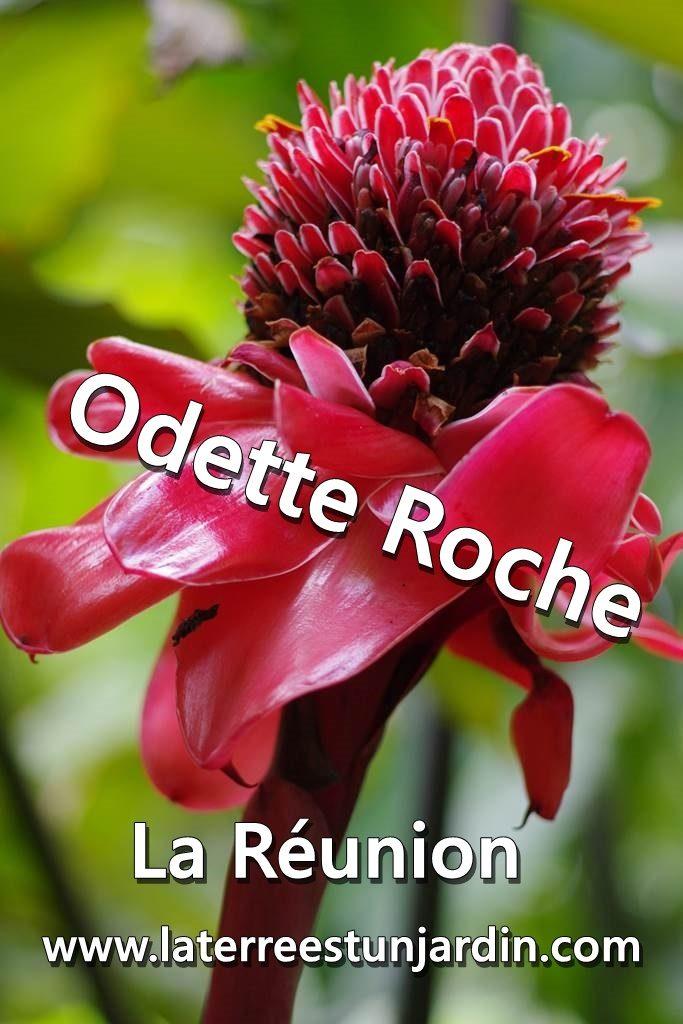 Odette Roche