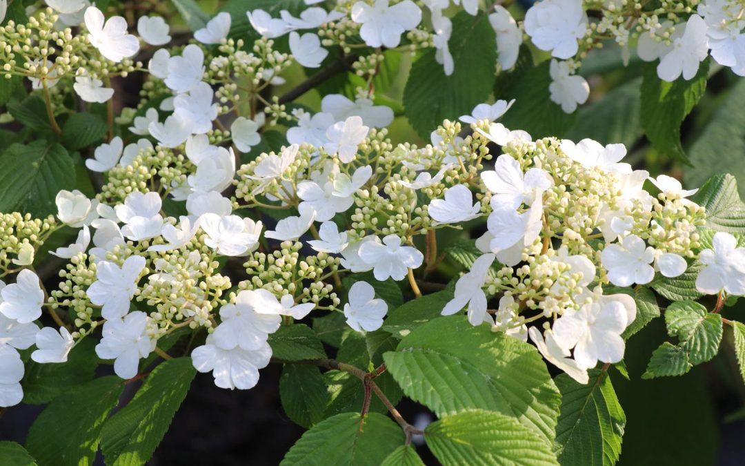 Viornes, des fleurs pour le printemps