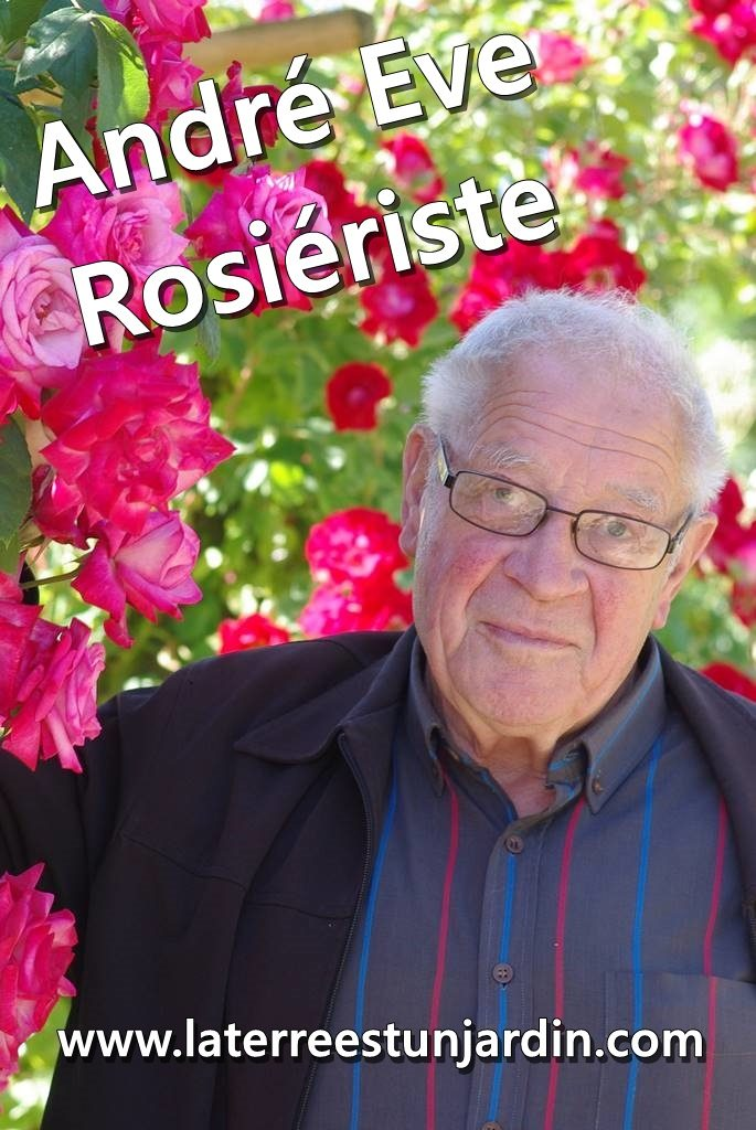 André Eve rosiériste