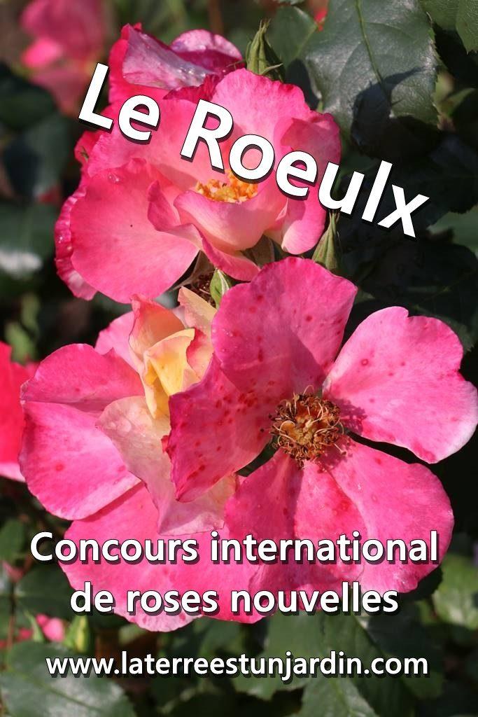 Concours de roses du Roeulx