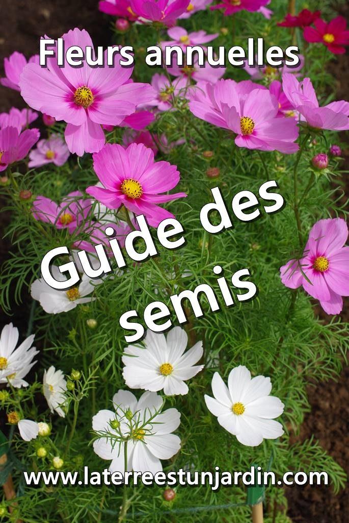 Semis de fleurs annuelles