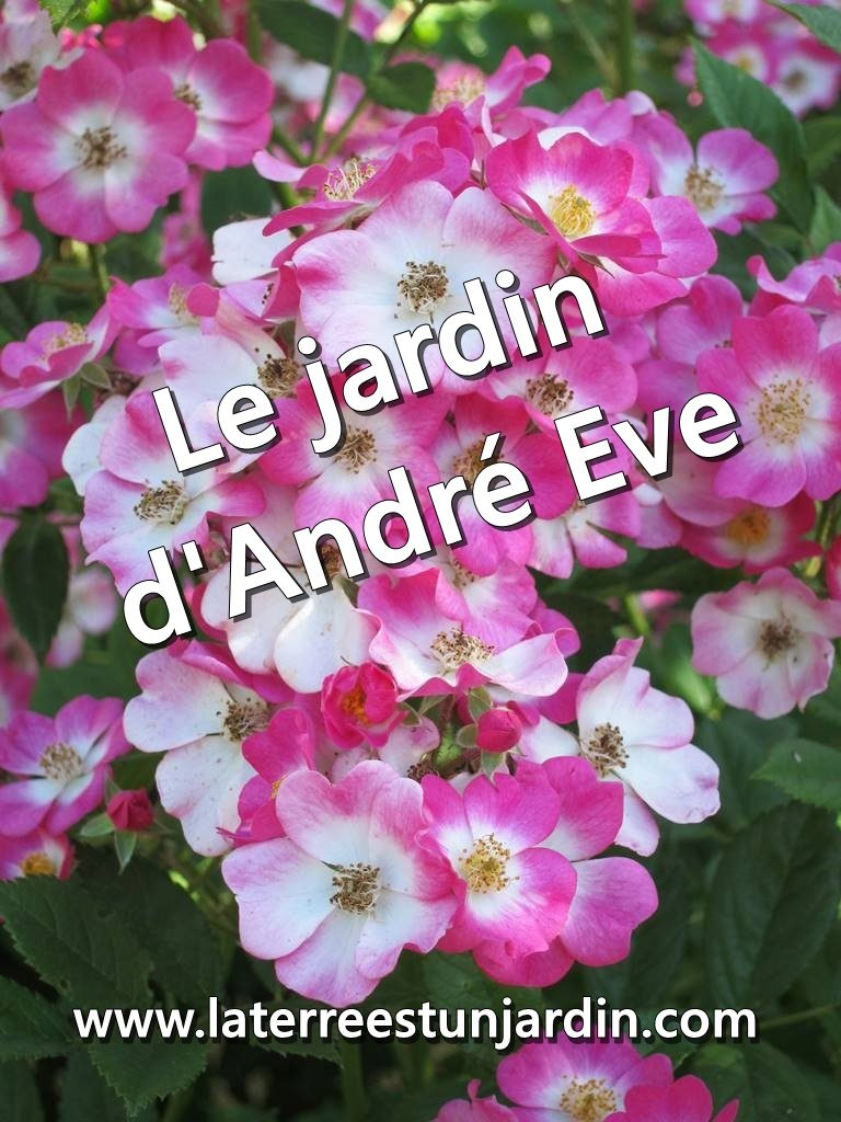 Jardin d'André Eve