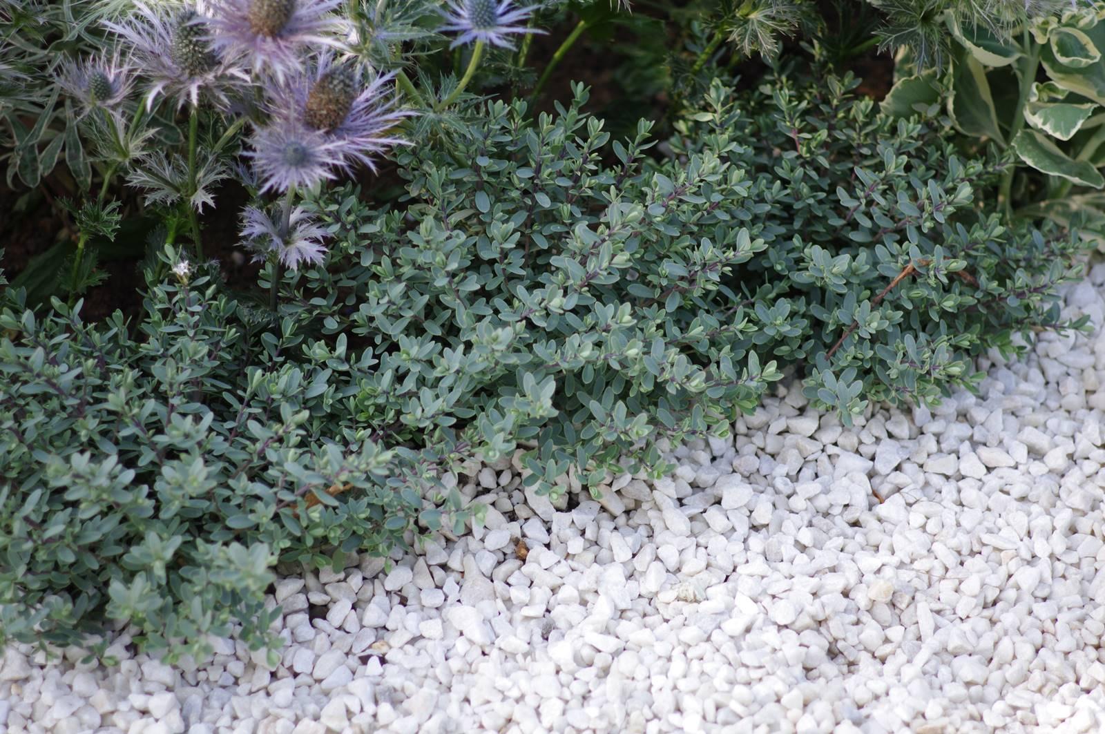 Canicule et sécheresse au jardin