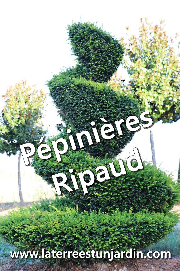 Pépinières Ripaud