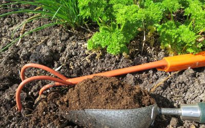 Le terreau, pour semis et plantations