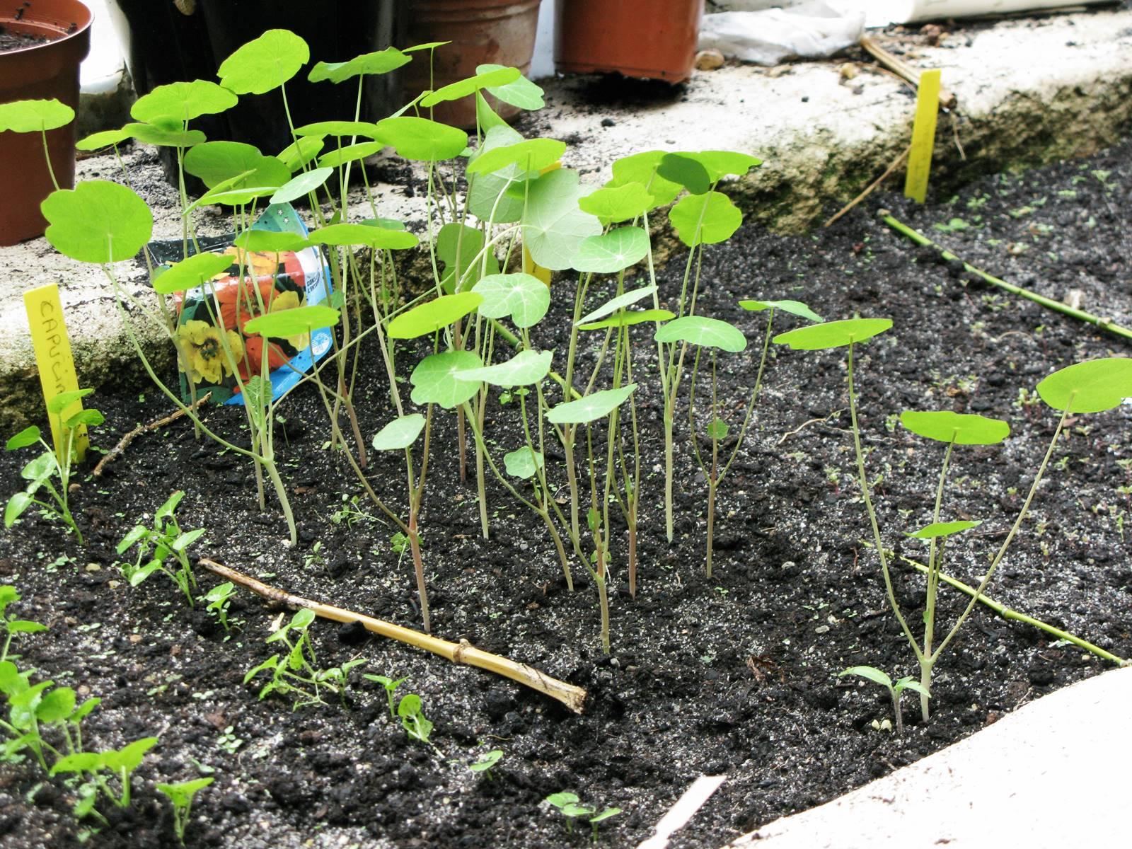 Terreau jardin