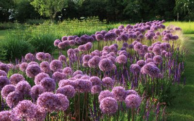 Georges Lévêque, l'âme des jardins