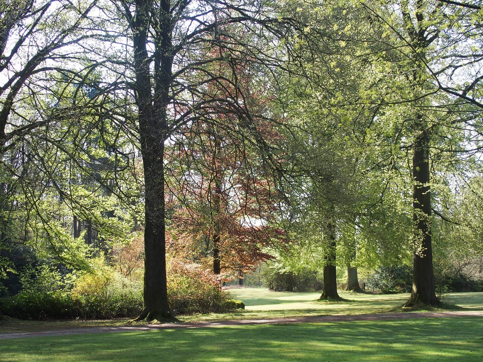 Bois Eloi pelouse avec hêtres