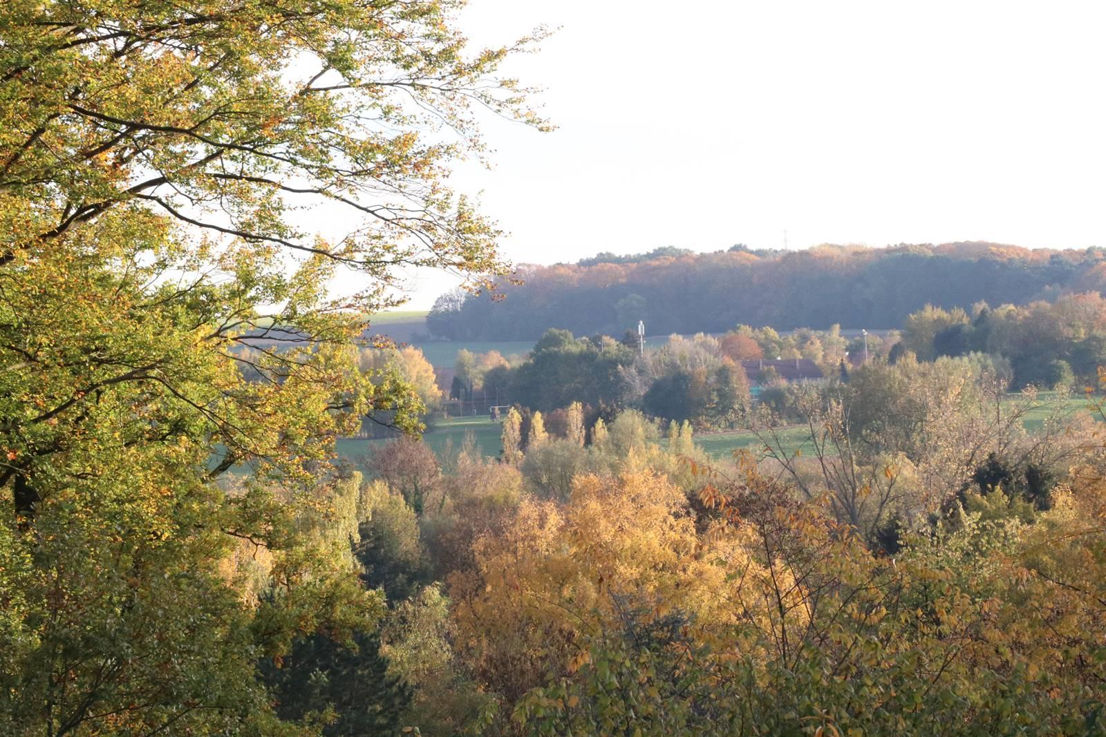 Bois Eloi automne vue