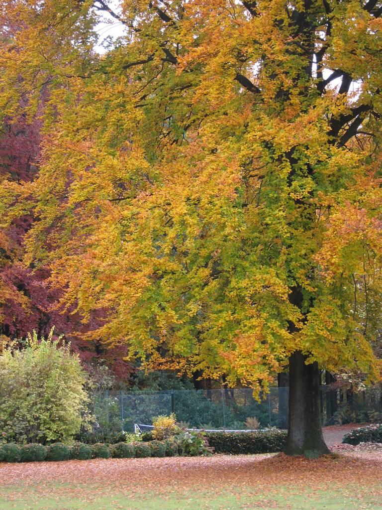 Bois Eloi hêtres automne